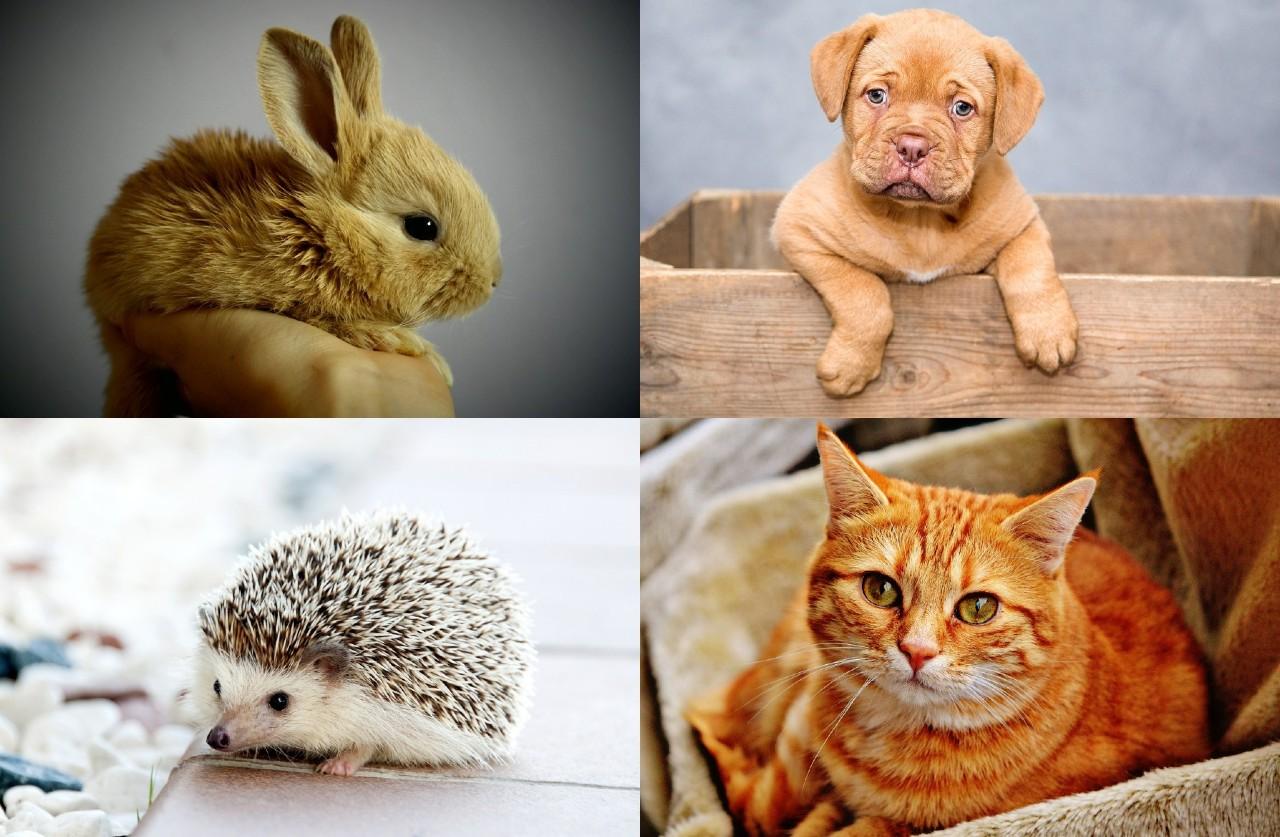 animali domestici vietati in Italia