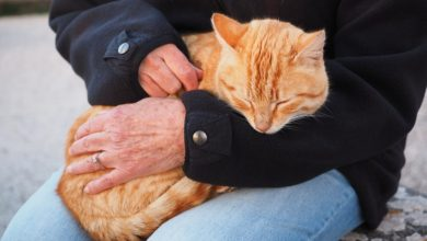 gatti pet therapy corsi addestramento