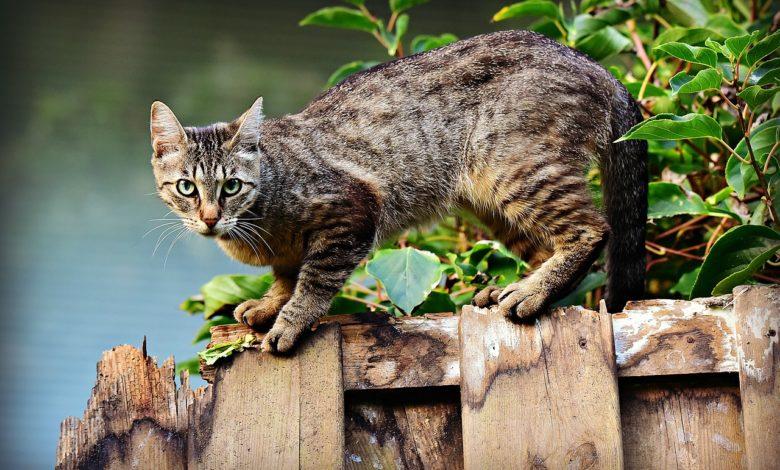 gatti scomparsi Lesignano Bagni Parma