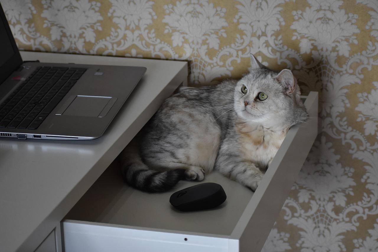 gatti stress proprietari smartworking