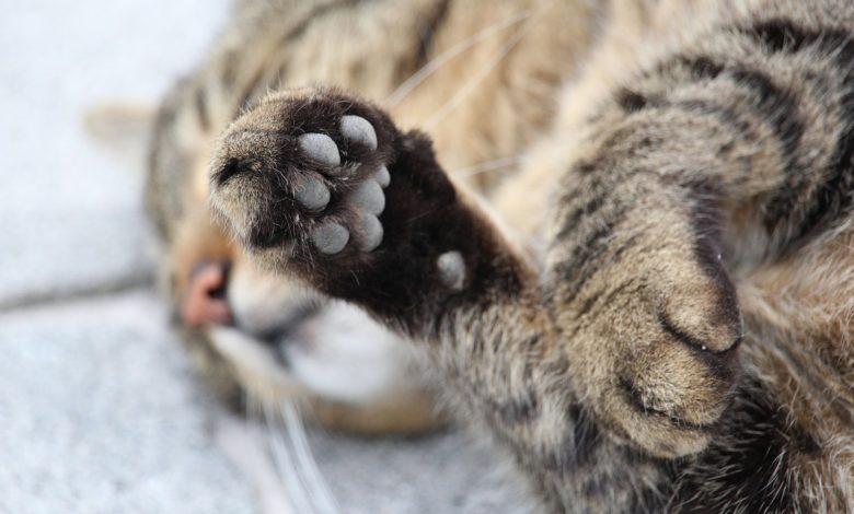 gatto verniciato rosso denuncia Enpa