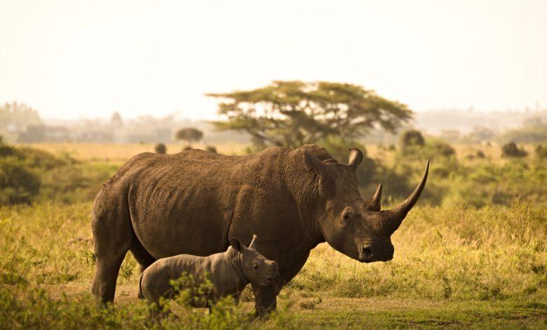 giornata mondiale rinoceronte