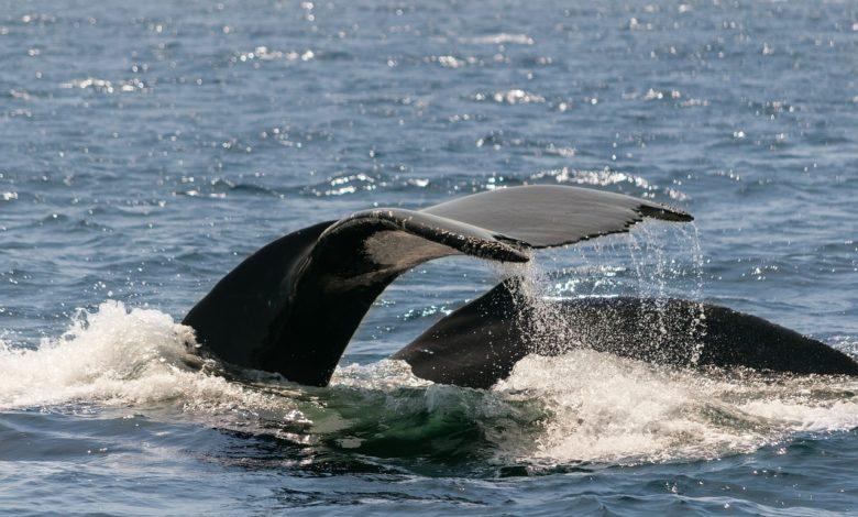 inquinamento acustico mare rischio cetacei
