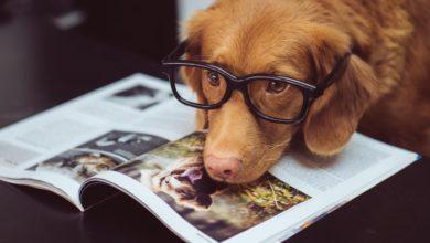patentino proprietari cani