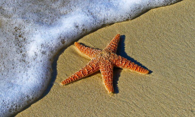 stelle marine cambiamento climatico