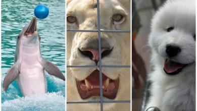 Francia vieta animali circhi parchi acquatici e vendita cani e gatti
