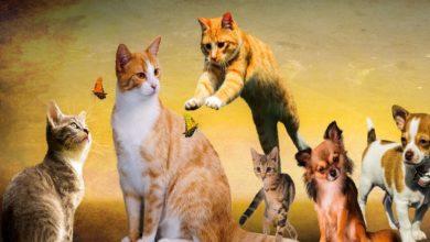 Giornata Mondiale Animali