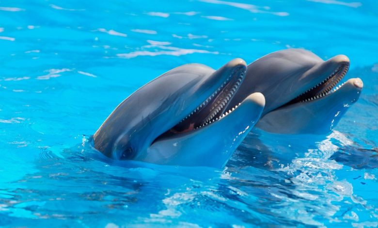 Hawaii vietato contatto con delfini