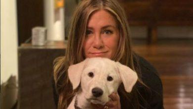 Jennifer Aniston cani