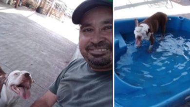 Messico uomo salva randagi