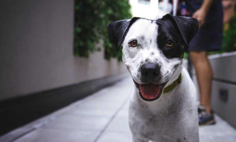 Pet House convivenza animali condominio