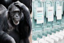 Vaccino anti-Covid animali