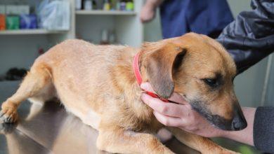 adozioni lockdown vaccini cani e gatti