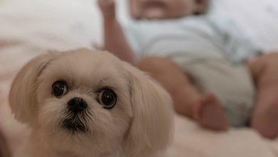 pediatri cani fanno bene bambini